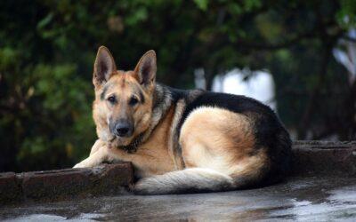 Filing a Dog Bite Lawsuit in Minnesota